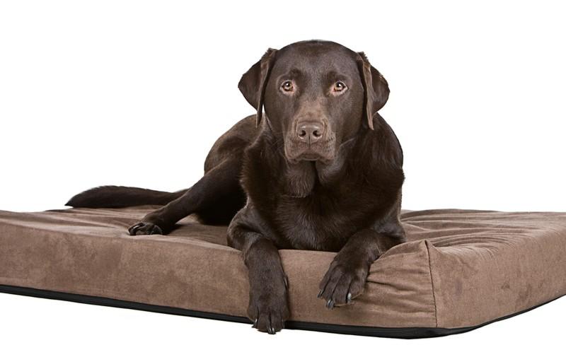 Hnědý pes na matraci