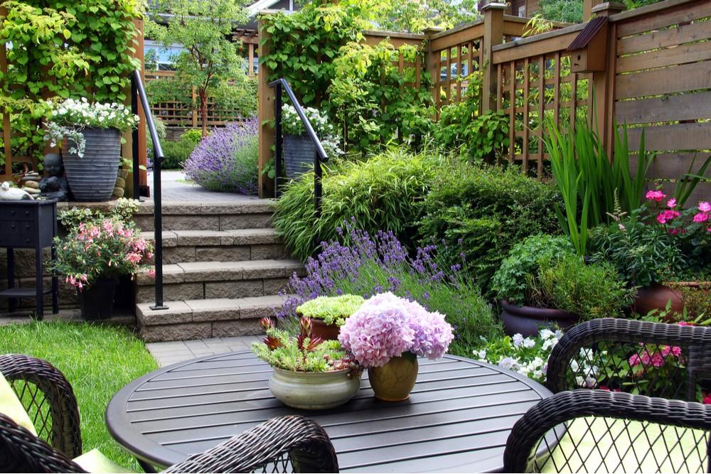 pěstování levandule v zahradě