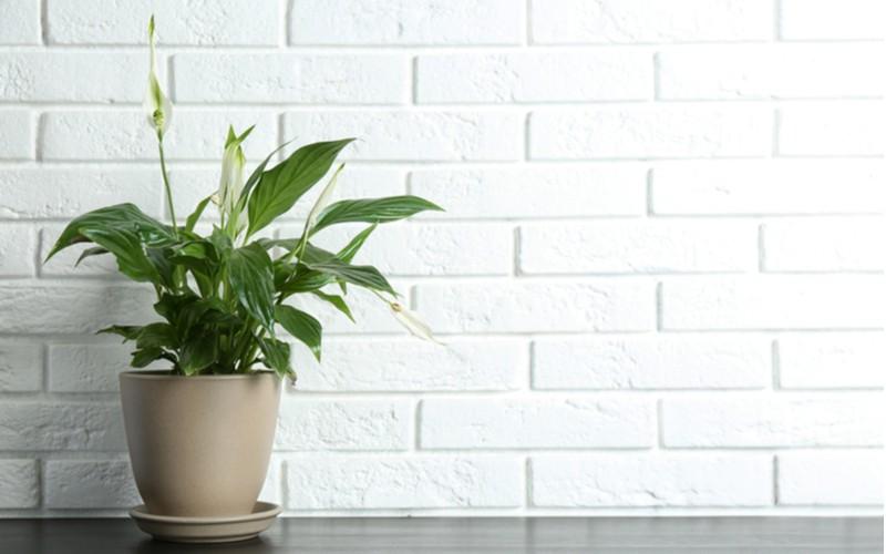 Lopatkovec elegantní doplněk v domácnosti nebo kanceláři