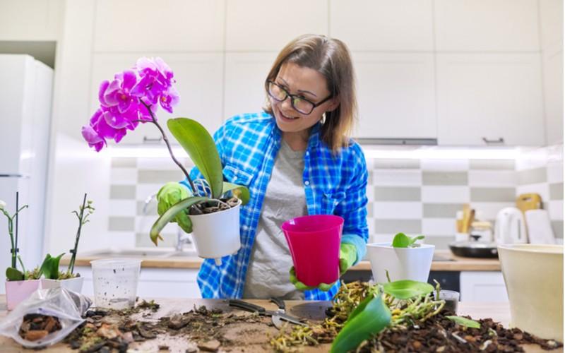 pěstování orchideje - žena prosazuje růžovou orchidej