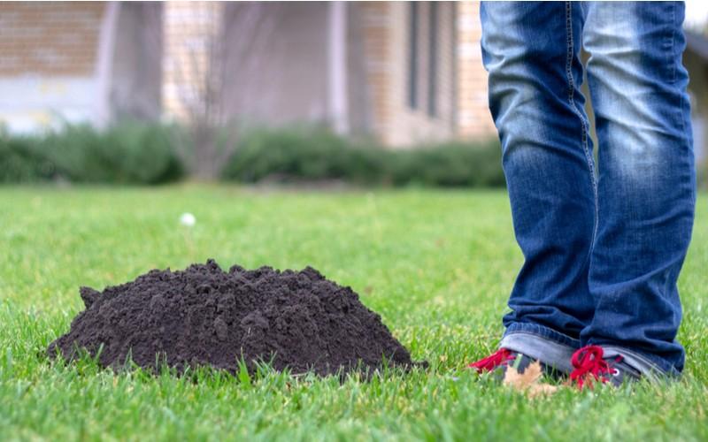 Krtince v trávě
