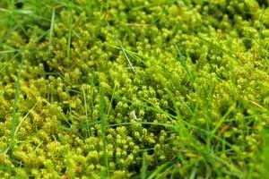 Mech v trávníku