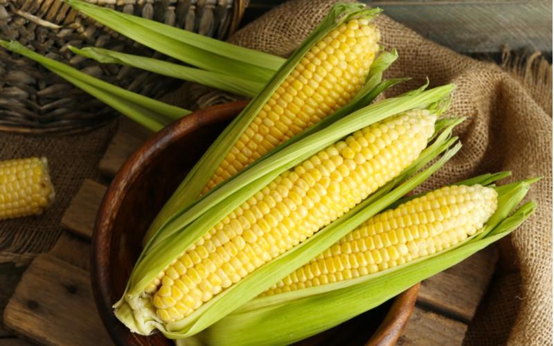 mladé a čerstvé kukuřičné klasy