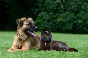 Pes, kočka v trávě