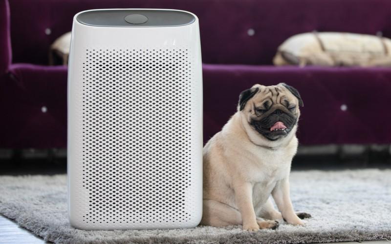 Ionizátor vzduchu vedle psa