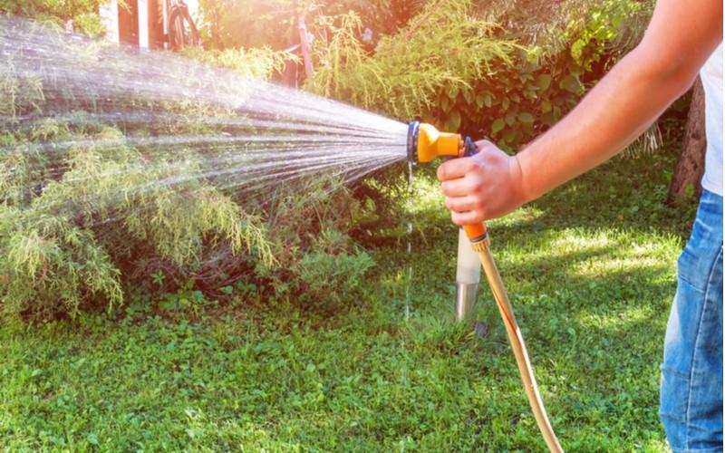 ruční zalévaní trávníku s hadicí