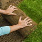 Travní koberec: zelený trávník na zahradě do několik dní - jak na to?