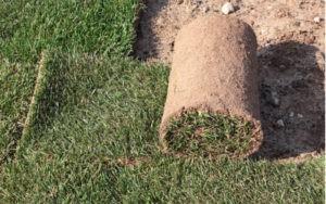 Vyložený kobercový trávník