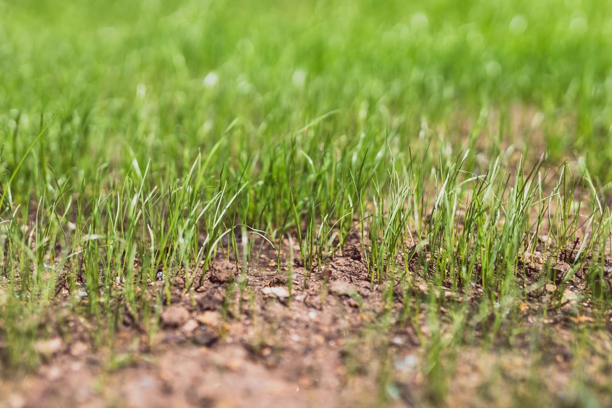 Jak založit trávník