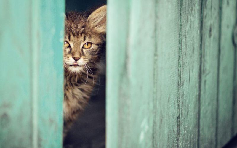 Kočka se dívá z kůlny do dvora