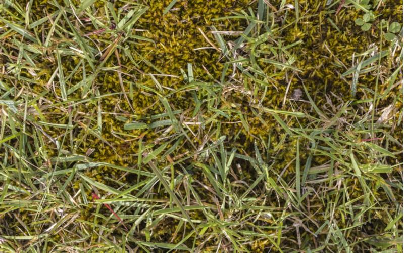 Mach v okrasném trávníku brzy na jaře