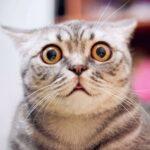 Odpuzovač koček, nebe jako nejjednodušší vyhnat kočku ze zahrady