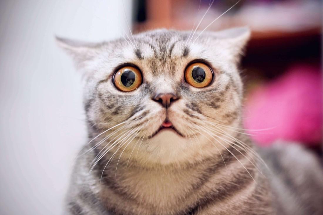odpuzovače koček - vylekaná kočka