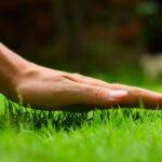 Péče o trávník (podle ročních období)