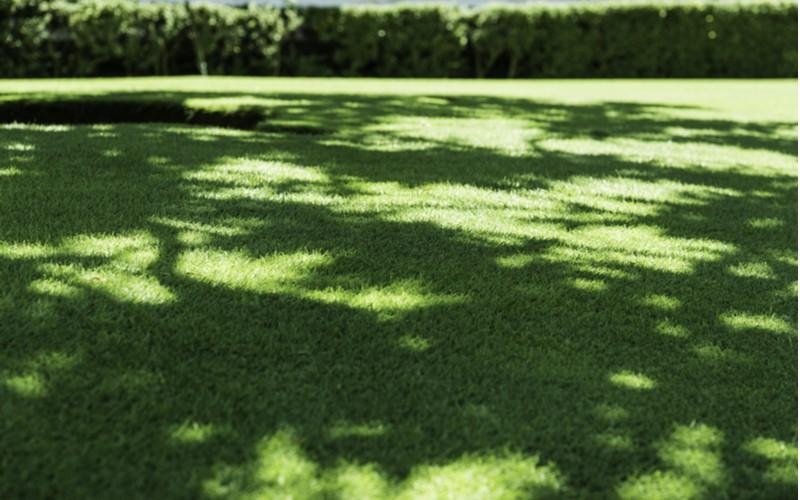 Trávník do stínu