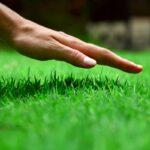 Trávník svépomocí - vše o trávníku od A po Z, založení a péči
